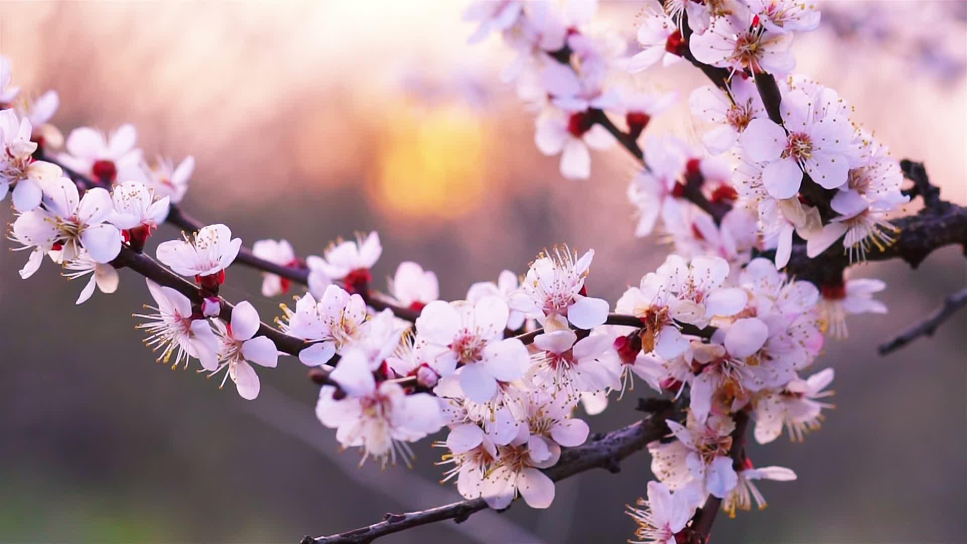 Весна и ее банальные последствия